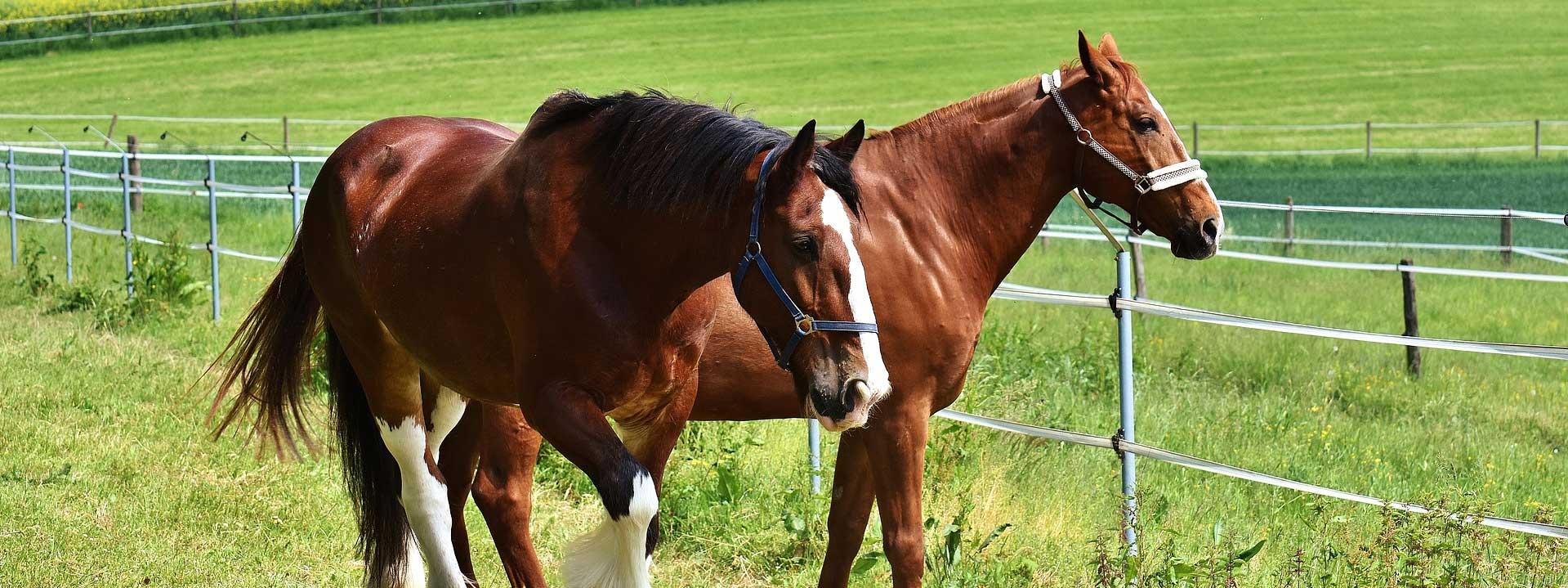 pferdeparadies